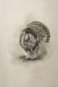 Sketching - Turkey