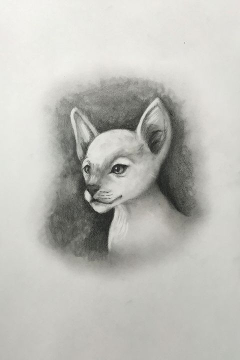 Sketching - Siamese (White) - Online Lesson Demo Works