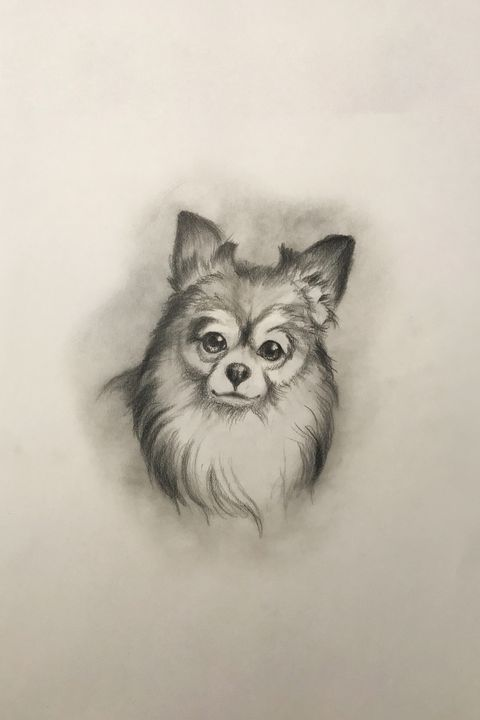 Sketching - Chihuahua - Outschool Demo Works