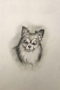 Sketching - Chihuahua