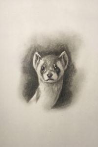 Sketching - Ferret