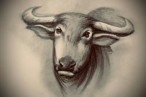 Sketching - Water Buffalo