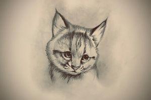 Sketching - Lynx (Bobcat)