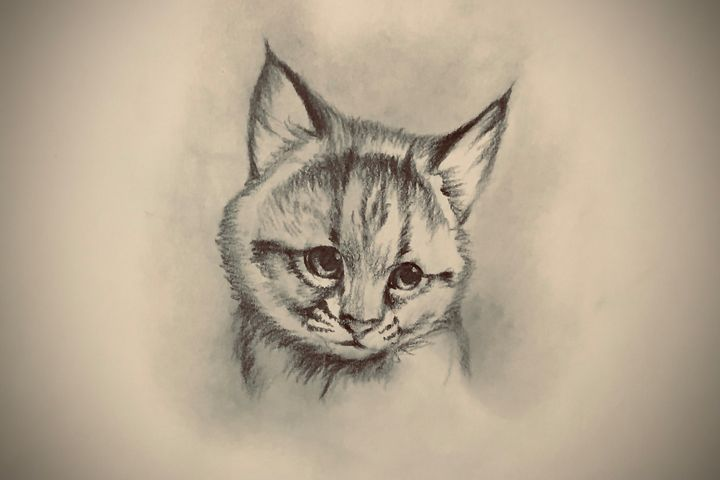 Sketching - Lynx (Bobcat) - Outschool Demo Works