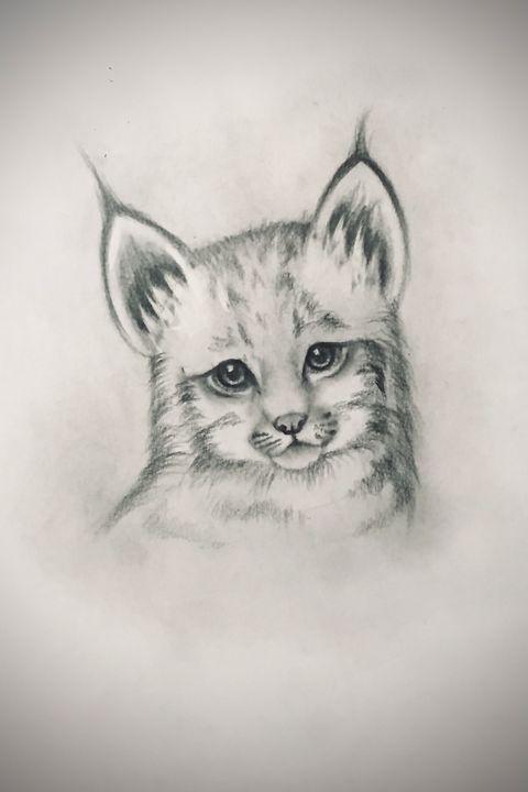 Sketching - Canada Lynx - Outschool Demo Works