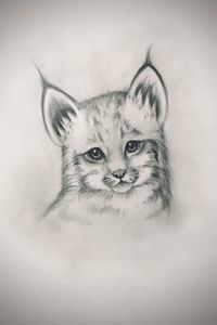 Sketching - Canada Lynx