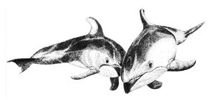 Pair of Dolphins - Greg McBride