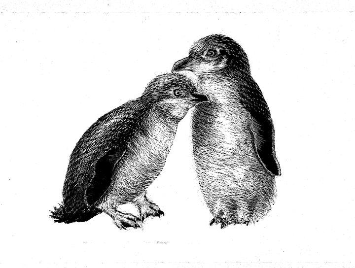 Fairy Penguins - Greg McBride
