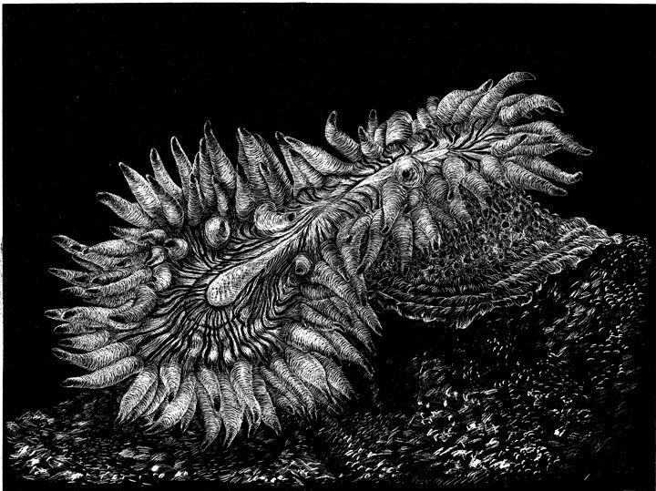 Sea Anemone cloning - Greg McBride
