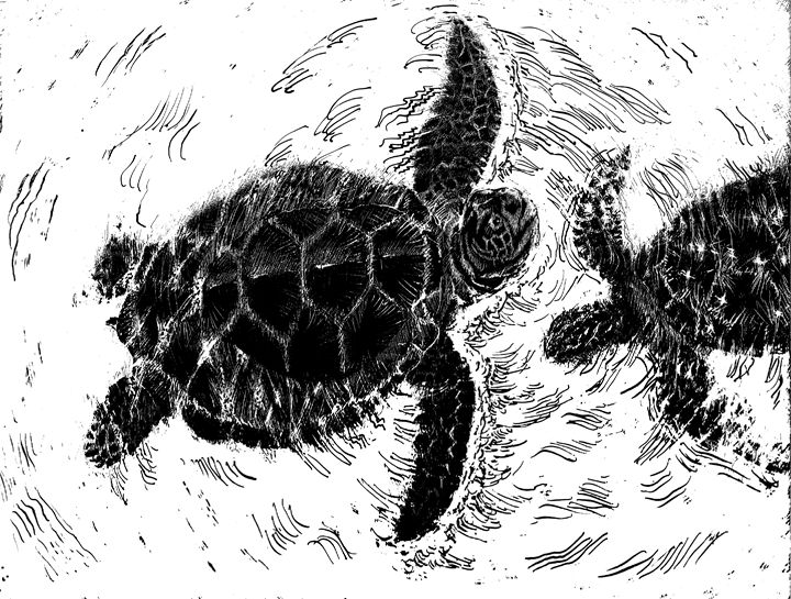 Green Sea Turtles - Greg McBride