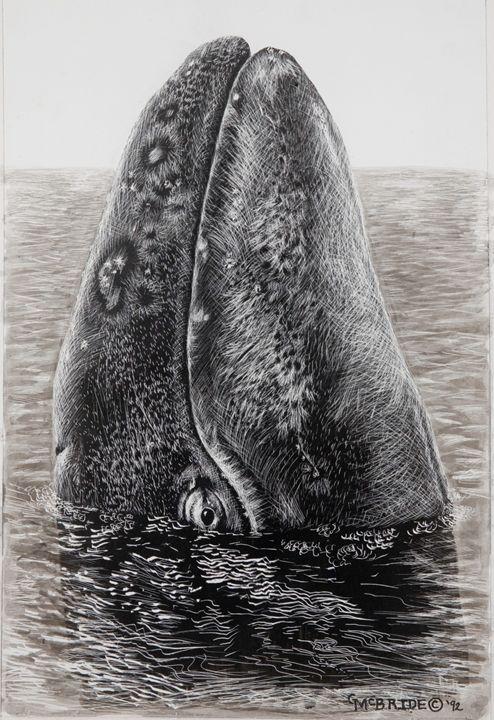 Skyhopping Gray Whale - Greg McBride