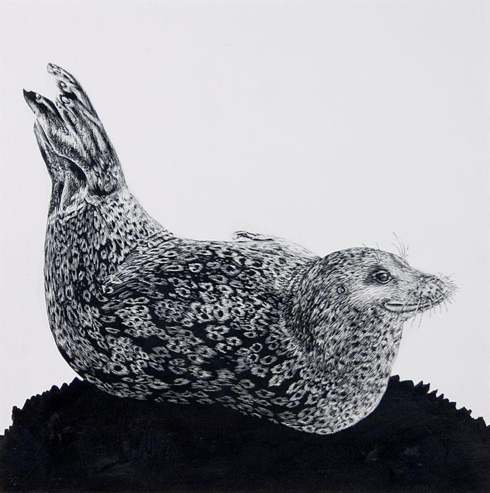 Harbor Seal - Greg McBride
