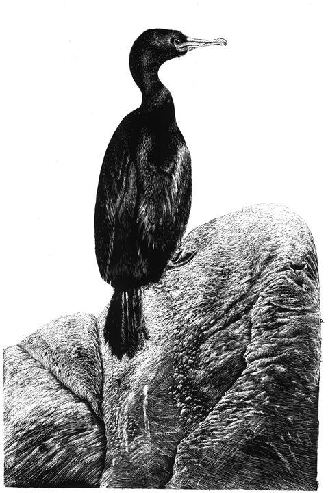 Cormorant - Greg McBride