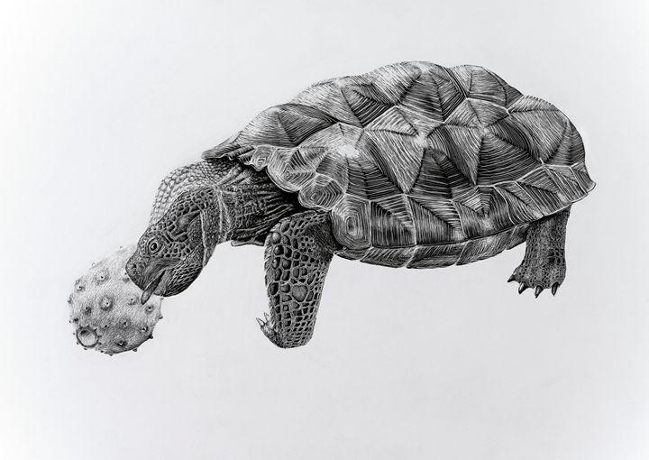 Desert Tortoise - Greg McBride