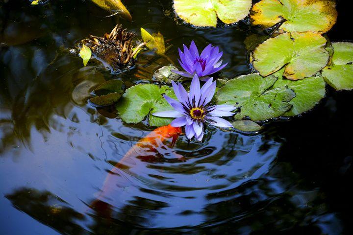 beautiful natural scene - Itzel Bee
