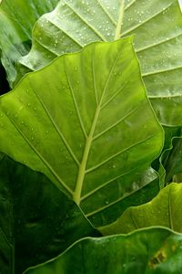 wet natural leaves