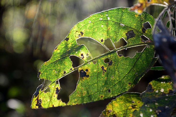 enlighten leaf - Itzel Bee