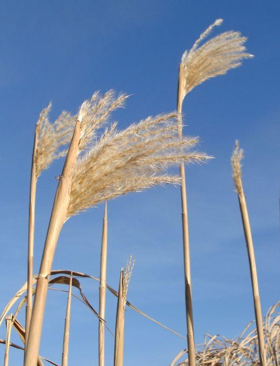 ' Tall grass' - MGL
