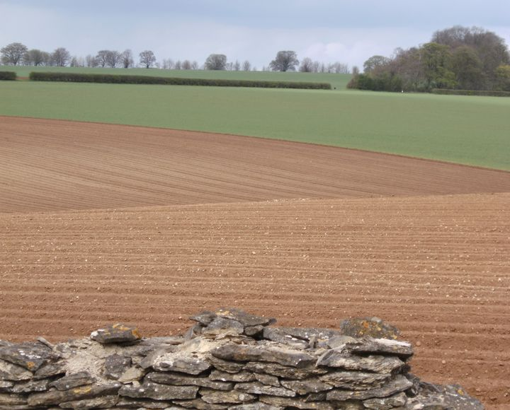 'Ploughed fields' - MGL