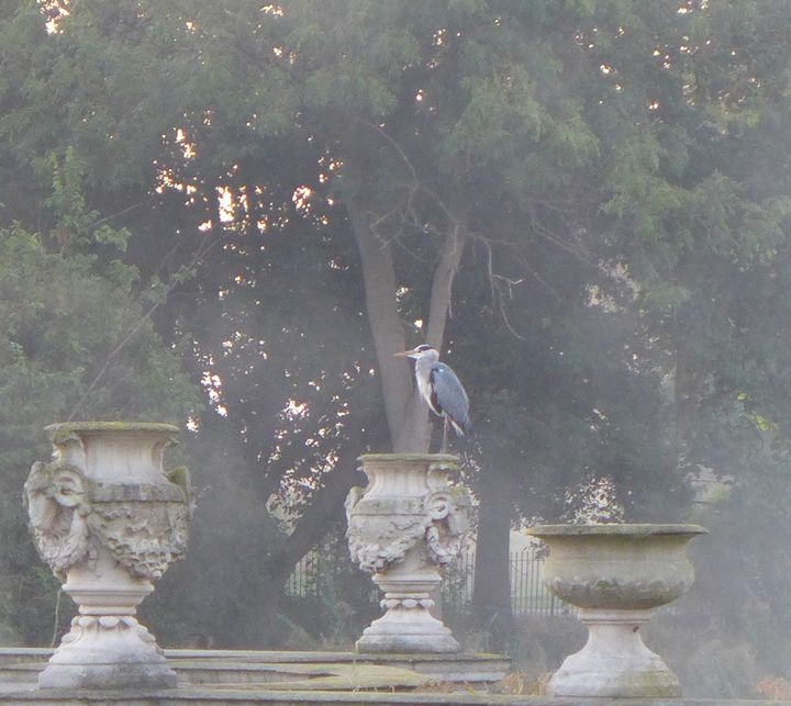 'Heron in Hyde Park' - MGL