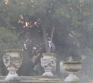 'Heron in Hyde Park'