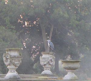'Heron in Hyde Park'