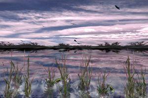Buzzard Swamp - Patrick's