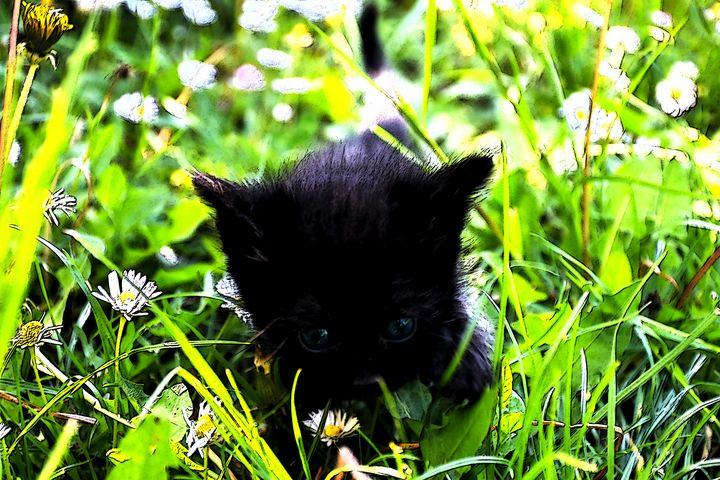 Black kitten - Sasha