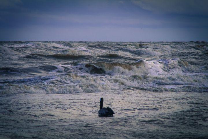 Old Pelican Photo - Casey Tabor