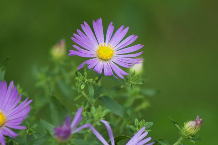 Wild Flower - Casey Tabor