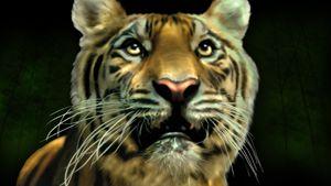 Tiger - Martin Vincent