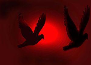 Bird's - Martin Vincent