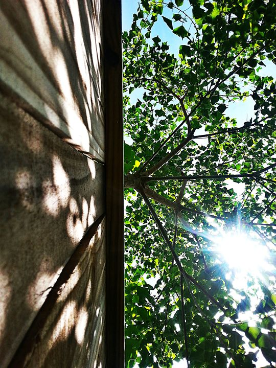 Sheets of green skylights - Wounds become passageways, dark preludes