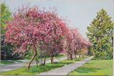 Blooming apple trees alley