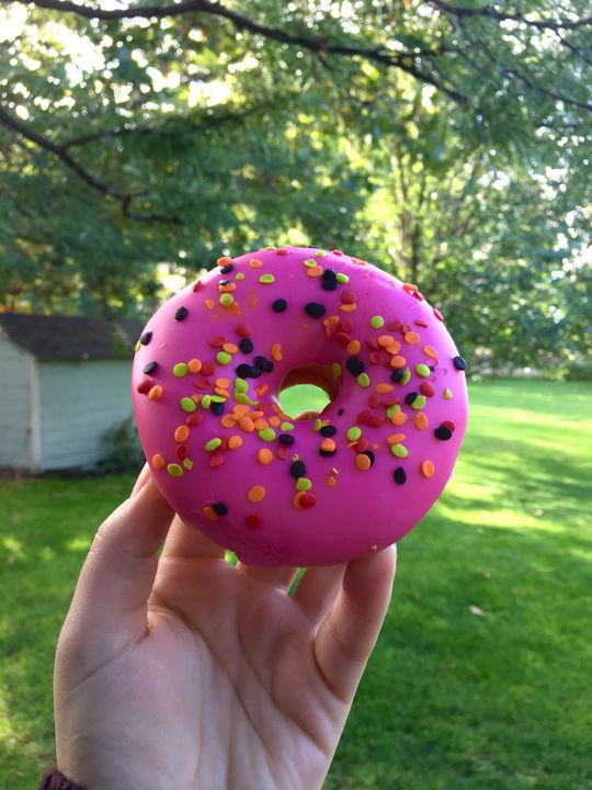 Doughnut - Every Day Pictures