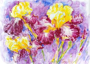 Flower power - Irises #4
