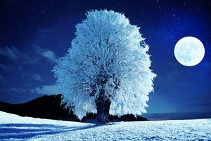 Moonlit Winter Night