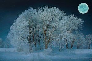 Magical Winter Night