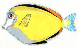 Japanese Surgeonfish