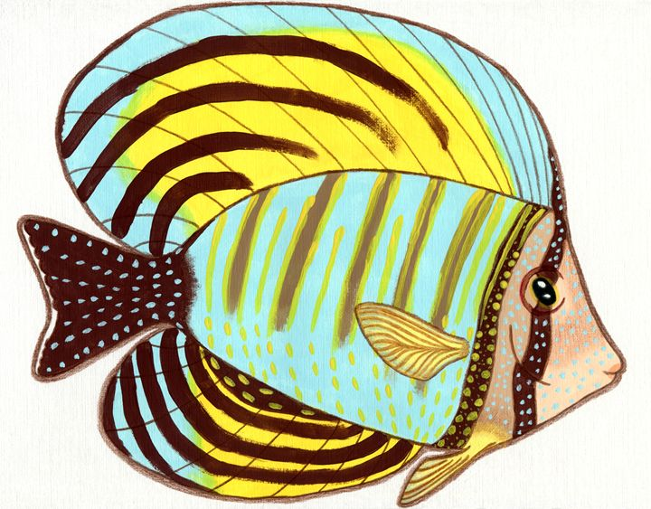 Red Sea Sailfin Tang - Feami HuX's Gallery
