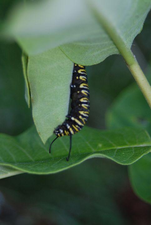 Hungry Caterpillar - tiffanycassanophotography