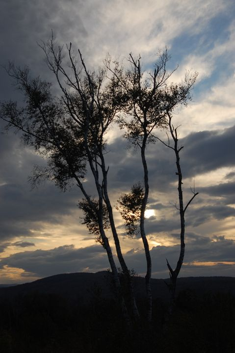Craggy Tree - tiffanycassanophotography