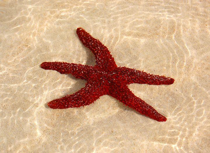Star Fish - tiffanycassanophotography