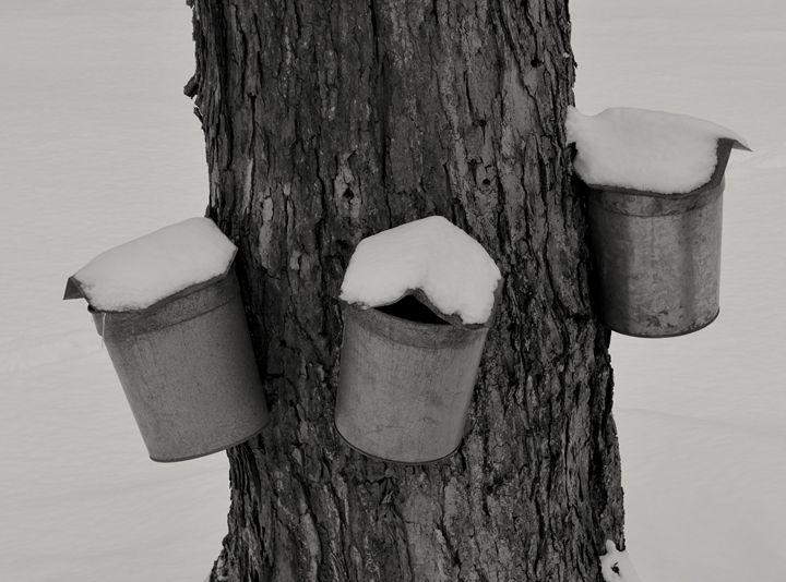 Maple Sugaring - tiffanycassanophotography