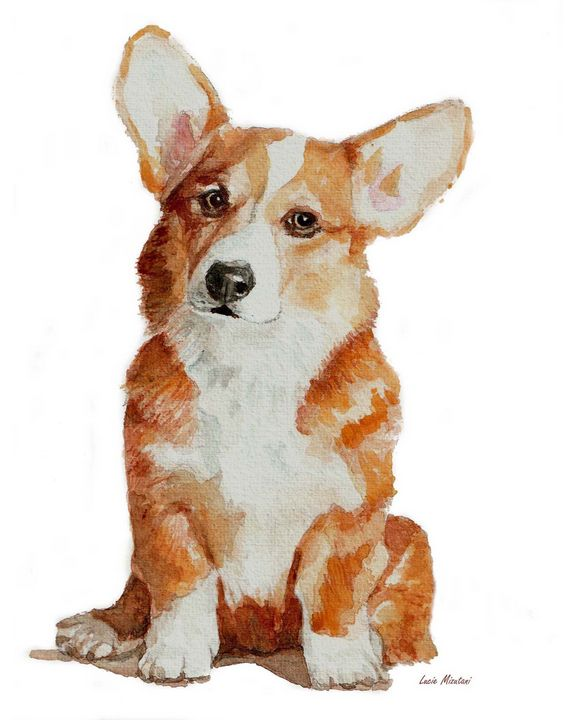 Corgi Welsh puppy - Lucie Mizutani