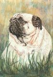 Pug dog portait