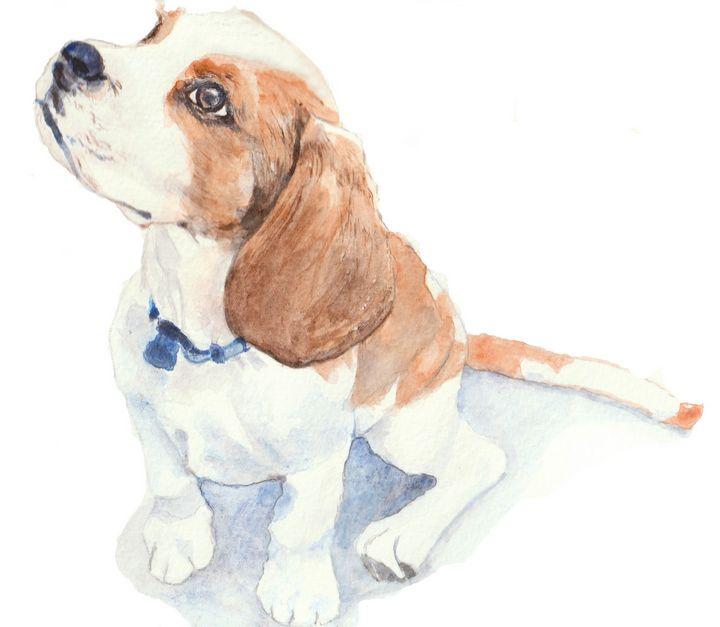 Beagle puppy in watercolor - Lucie Mizutani