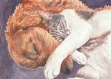 Golden Retriever sleep with cat