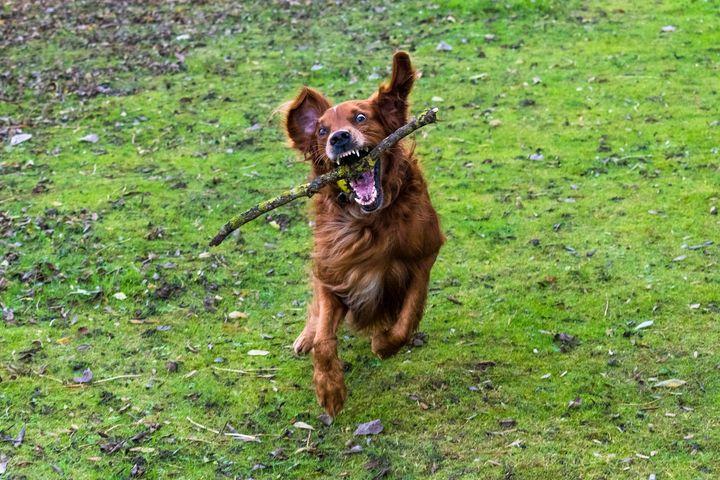 crazy dog - niyana