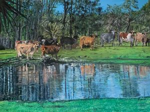Florida Cows in the Reflection